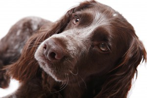pet photographer new forest hampshire