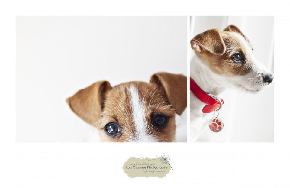 Pet Photographer Southampton
